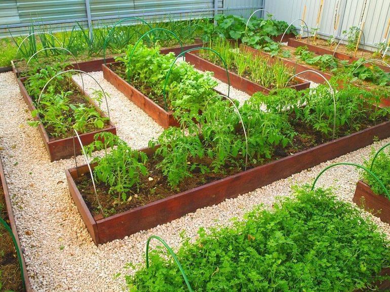 Средство от травы чтобы не росла