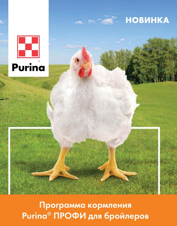 Комбикорм для цыплят: как сделать своими руками и как выбрать готовый, основные правила кормления
