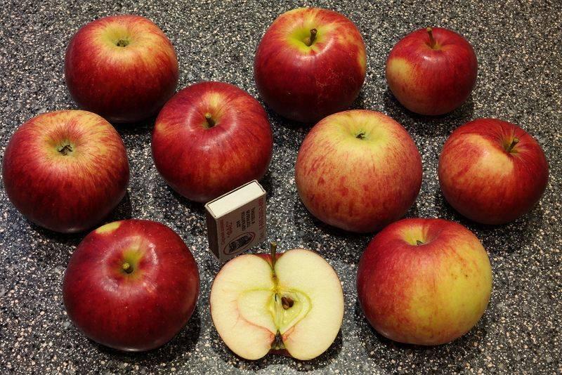 О яблоне Юный Натуралист, описание сорта, характеристики выращивание