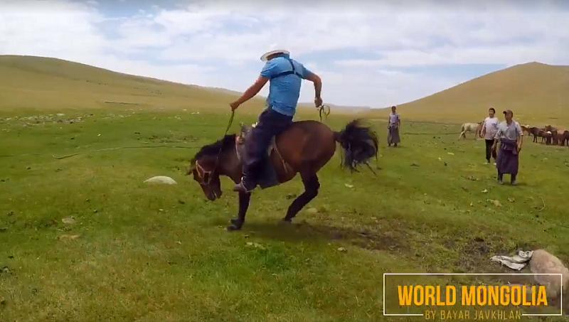 Как ездить на лошади: правила верховой езды