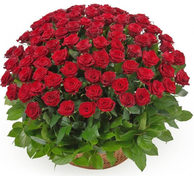 Доклад на тему роза сообщение 2, 3, 6 класс (описание для детей)