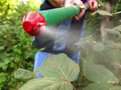 Препарат квадрис: как разводить иприменять для защиты растений отболезней