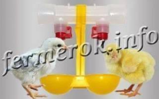 Пробиотики для бройлеров (название)