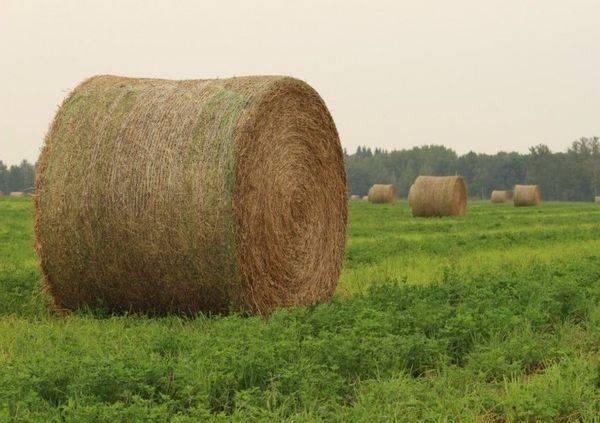 Сколько сена нужно корове на зиму тонн