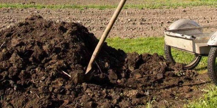 Выращивание огурцов в теплице и открытом грунте: уход на всех этапах развития