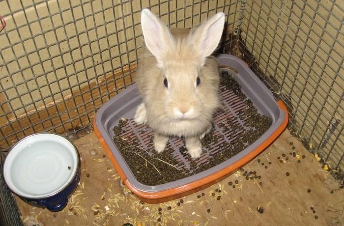 Что делать, если у кролика понос, чем лечить, чтобы не сдохли