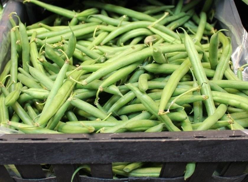Как вырастить отличную спаржевую фасоль: особенности выращивания