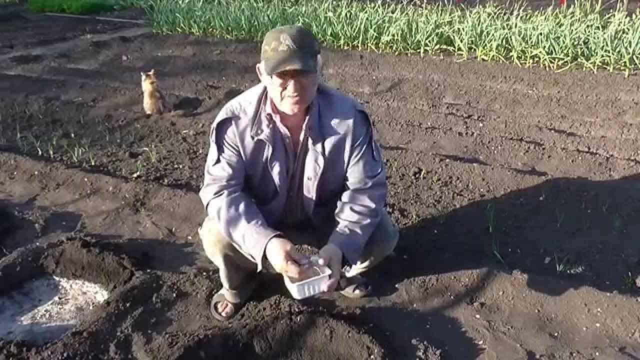 Как вырастить арбуз на огороде - подробная пошаговая инструкция!