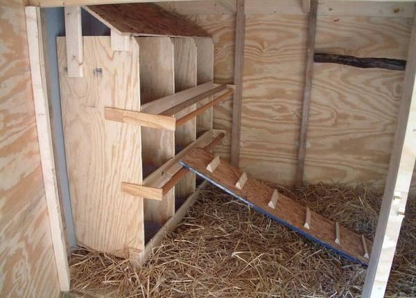 Гнезда для кур несушек, чтобы не клевали яйца
