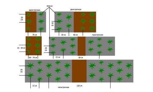 Посадка клубники осенью и весной в открытый грунт на агроволокно — тонкости, схема, подготовка почвы