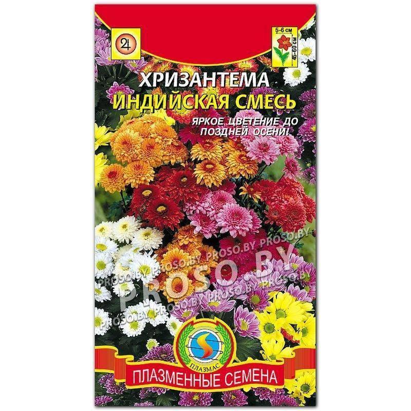 Хризантема индийская: сорта, описание, выращивание