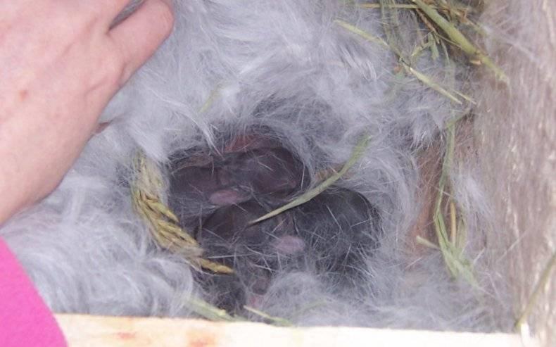 Чем кормить маленьких крольчат