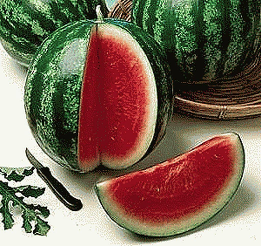 Лучшие сорта арбузов, с фото и описанием