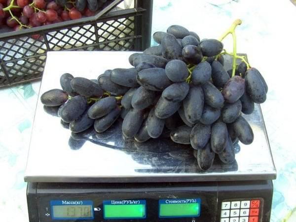 Как вырастить большие грозди винограда