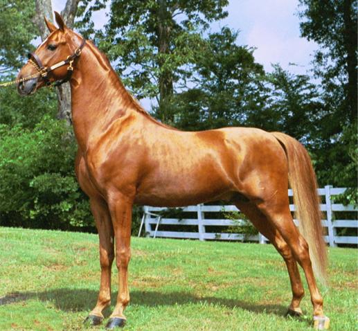 22 самые дорогие лошади