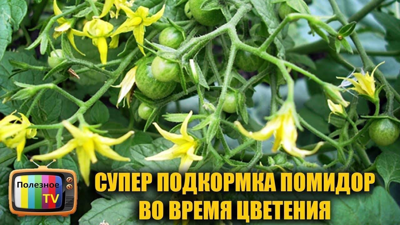 Чем подкормить томаты во время цветения, чем удобрять, как ускорить рост