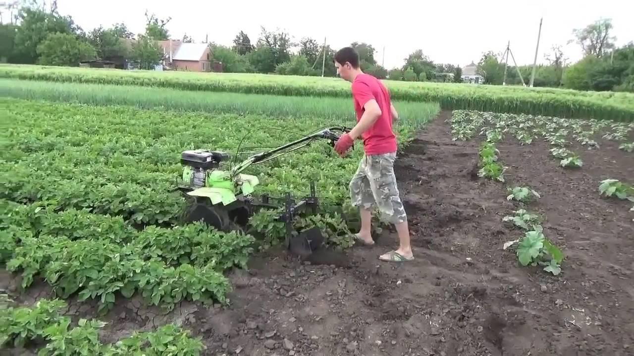 Как правильно окучивать картофель мотоблоком с окучником, советы