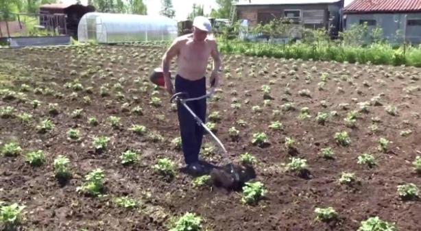 Прополка картофеля: приспособления и инструменты, инструкция