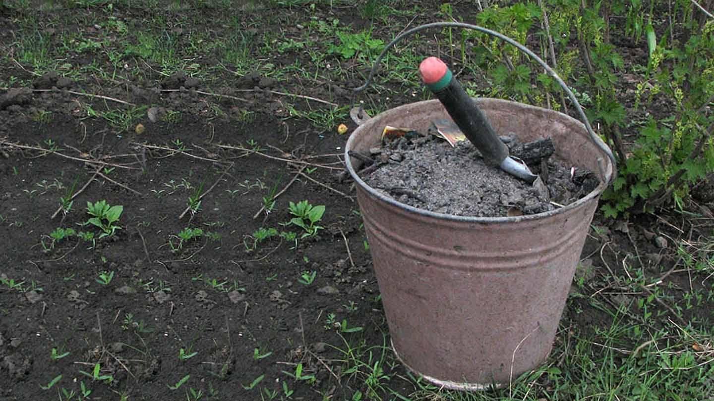 Чем подкормить виноград - минеральные удобрения и народные средства