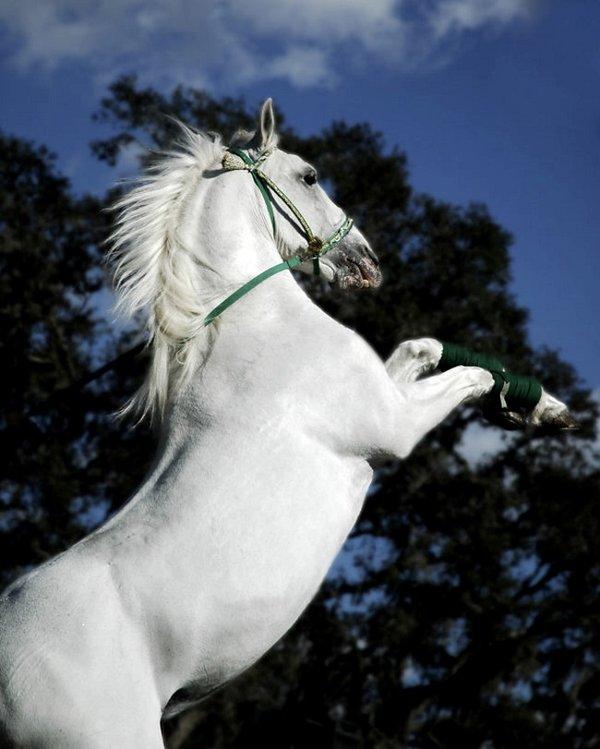 Домашняя лошадь — виды, описание, сложности ухода, породы и рацион питания лошадей (125 фото)