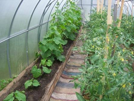 Что посадить после помидоров на следующий год, чтобы урожай порадовал