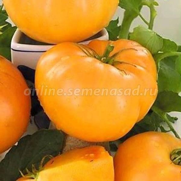 Каталог томатов: сибирская селекция и алтайские сорта