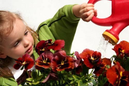 Популярные растения для озеленения и украшения детской комнаты и помещений детских дошкольных учреждений. рекомендованные и запрещенные (25 фото & видео) +отзывы