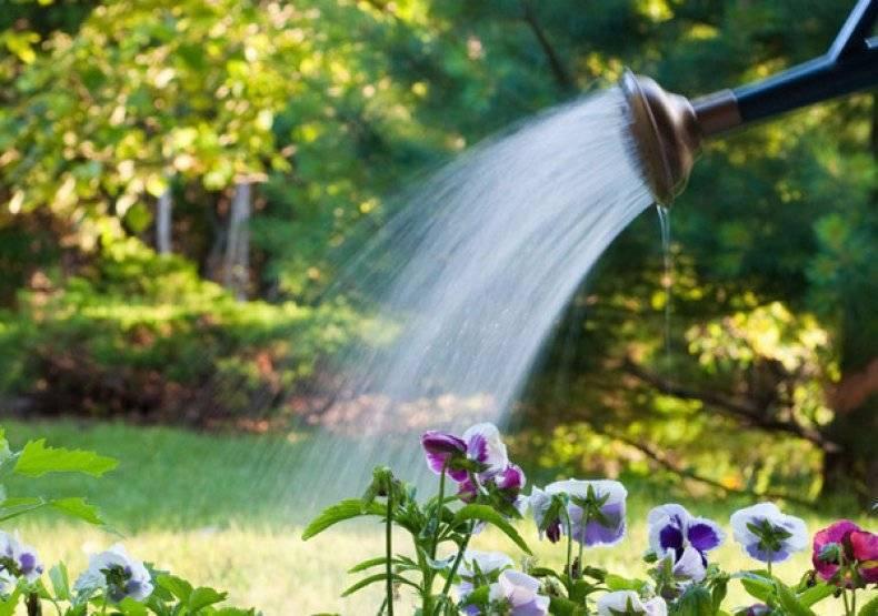 Виды цветка гравилат чилийский, посадка и уход, выращивание из семян