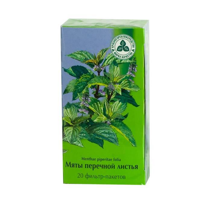 Лекарственное растение мята: полезные свойства и противопоказания