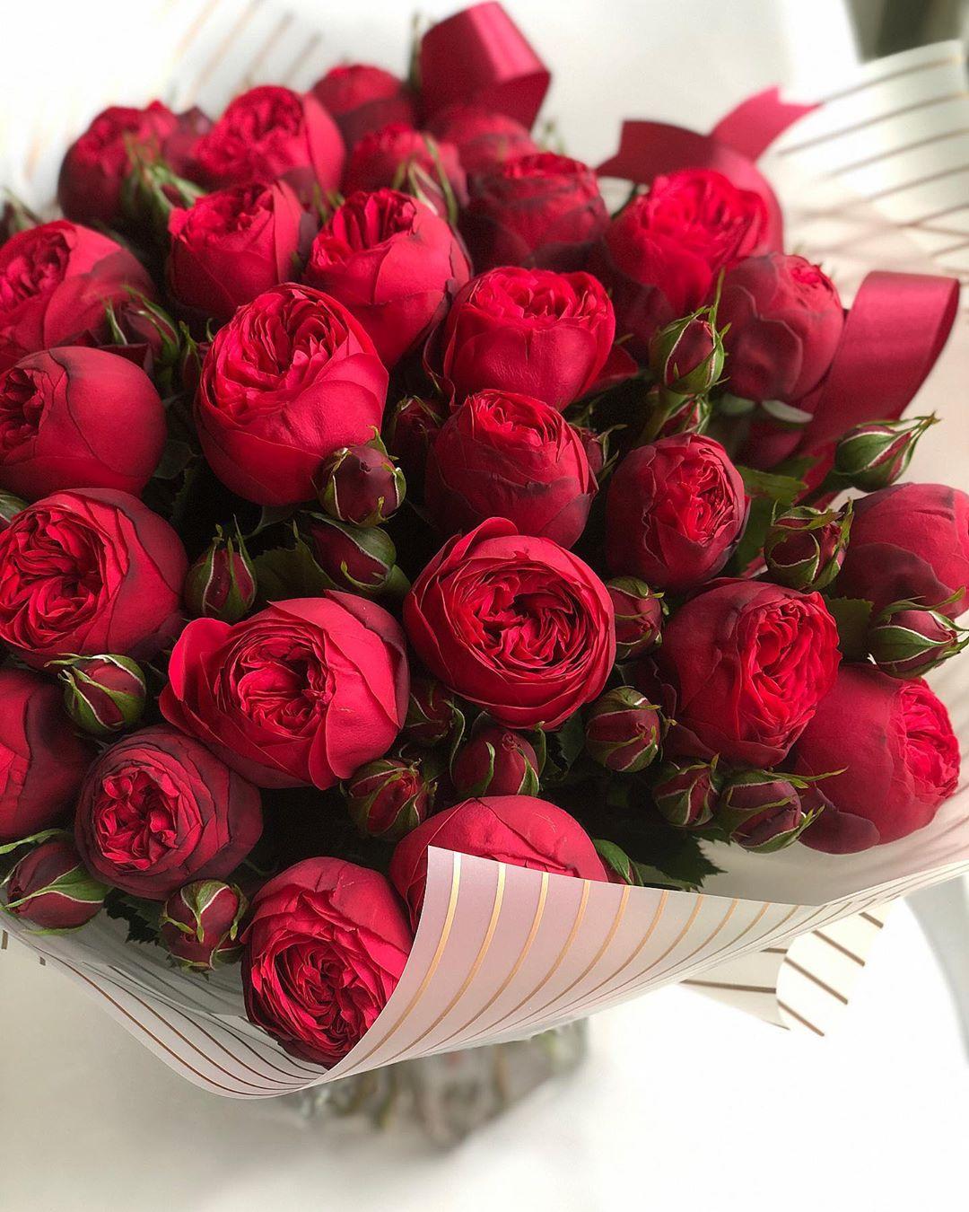 Красные розы (48 фото): лучшие сорта цветов, описание кустов с черно-красными, темно-красными и красно-белыми цветками