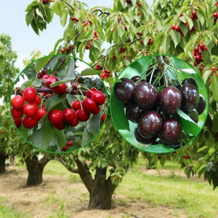 Фрукты с низким гликемическим индексом: список. польза и вред фруктов