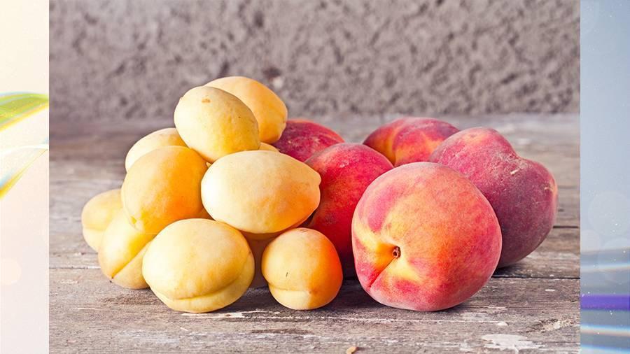 Чем отличается дерево абрикос от персика. выбираем качественные фрукты: абрикосы, персики и нектарины