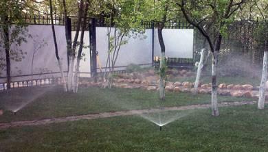 Когда лучше поливать растения утром или вечером. работы на садовом участке. как правильно поливать плодовые деревья, время полива