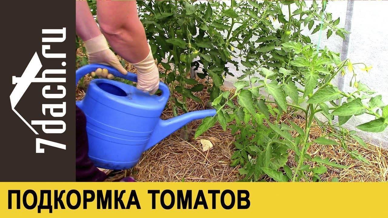 Как подкормить помидоры золой, удобрение для томатов и перца, применение