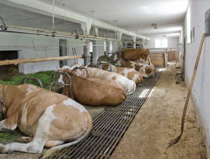 Стойло для коровы — как сделать своими руками в домашних условиях