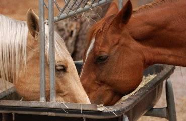 Что едят лошади?
