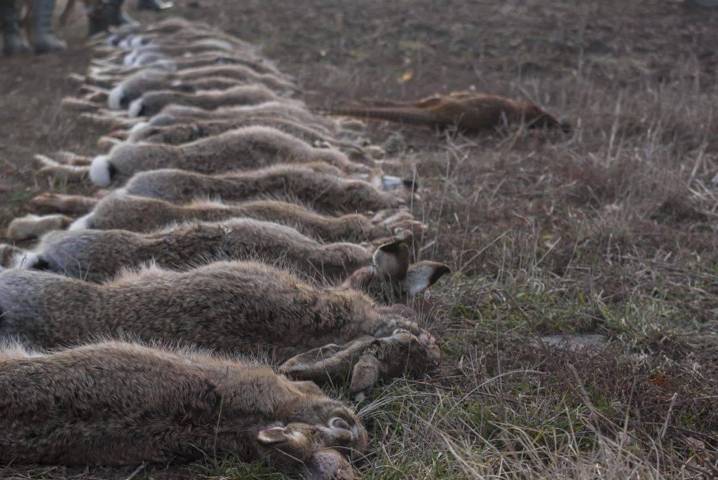 Почему дохнут кролики: причины, распространенные заболевания