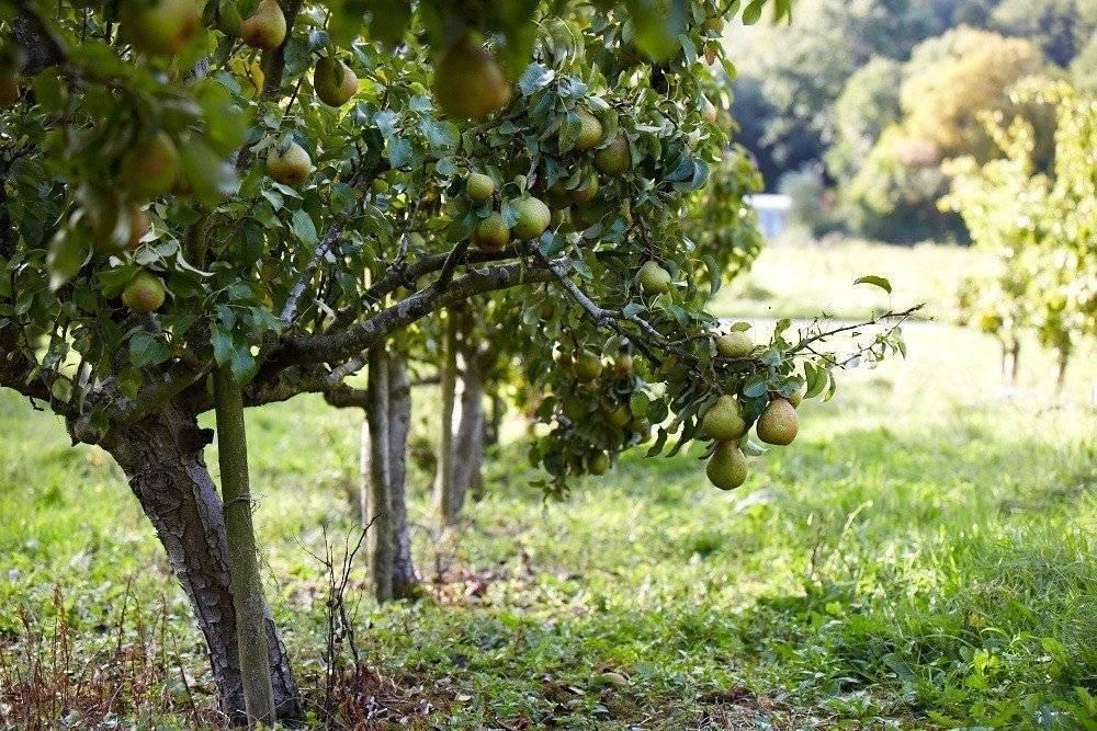 Таблица совместимости плодовых деревьев и кустарников