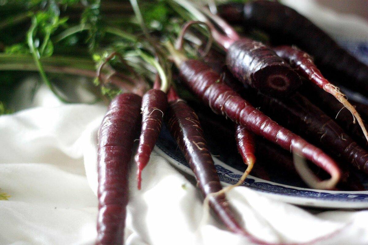 Черная морковь: фото, рецепты - рецепты