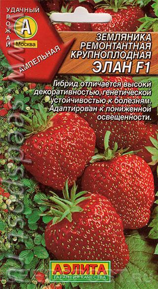 """Клубника """"эльсанта"""": описание сорта и агротехника выращивания"""