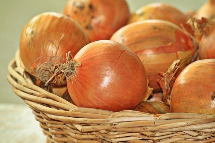 Как правильно сохранить лук-севок до посадки весной в домашних условиях