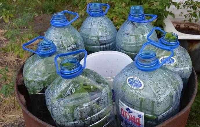 Посадка огурцов в 5 литровые пластиковые бутылки