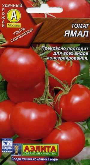 Выращивание томатов ямал