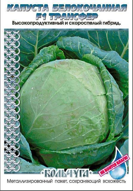 Выбор сорта и выращивание ранней капусты