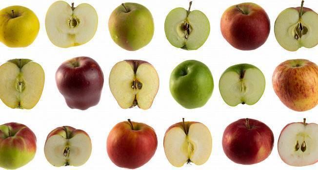 Ранние летние яблоки – самые вкусные сорта