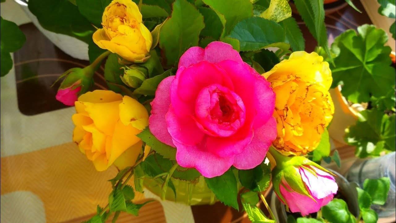 Что делать, если на розах появились вредители: меры борьбы, чем обработать