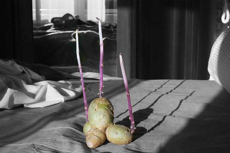 Что делать, если замерзла картошка? как разморозить?