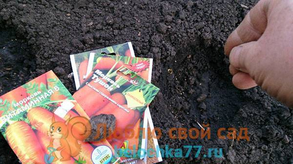 Можно ли сажать капусту после чеснока