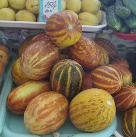 Сорт дыни амал f1: описание, агротехника выращивания и уход
