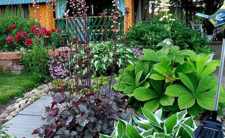 Гейхера: описание, агротехника, применение в ландшафтном дизайне